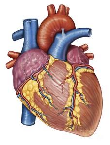 קורס זיהוי הפרעות קצב לב
